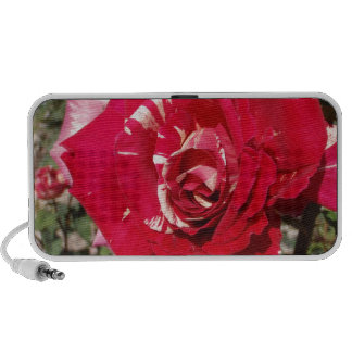 Red Rose With A Splash Of Cream Laptop Speaker