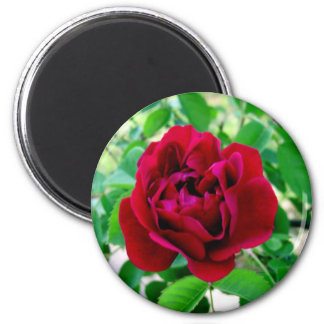 Red Rose with Bud Magnet