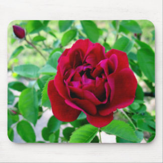 Red Rose with Bud Mouse Pad