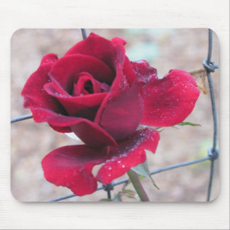 Red Rose with dew Mousepads