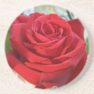 Red Rose with Garden Background Drink Coaster