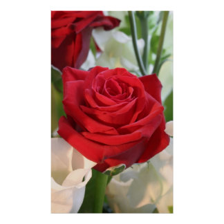 Red Rose with Garden Background Poster