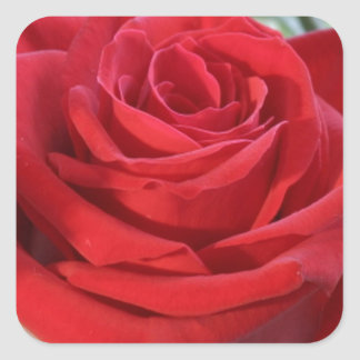 Red Rose with Garden Background Square Sticker