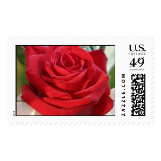 Red Rose with Garden Background Stamp