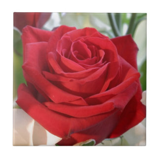 Red Rose with Garden Background Tile