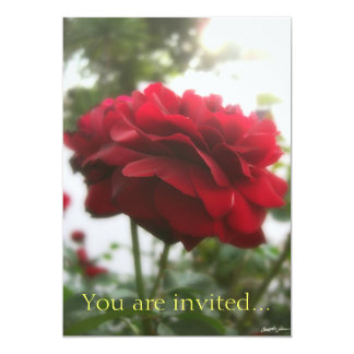 Red Rose with Light 2 Card