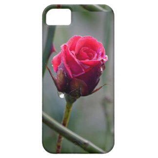 Red rose with water-drip, close-up, iPhone SE/5/5s case