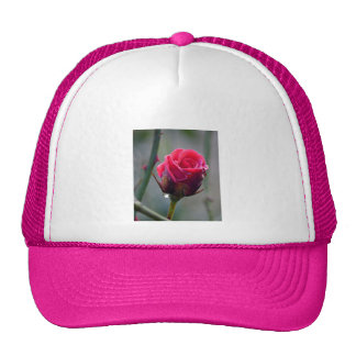 Red rose with water-drip, close-up, trucker hat