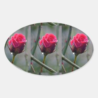 Red rose with water-drip, Nahaufnahmeim garden