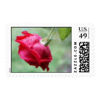 Red Rose With Water Droplets Postage