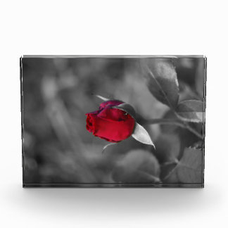 Red Rosebud Acrylic Award
