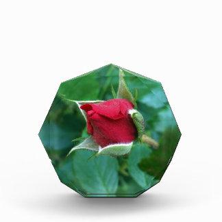 red rosebud award