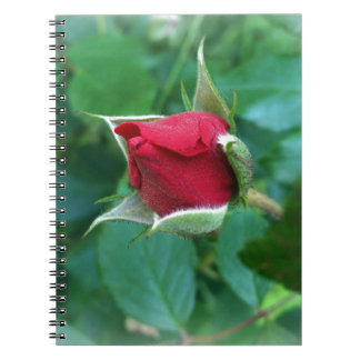 red rosebud notebook