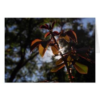 Red Rosebush Card - Beautiful Nature Photo