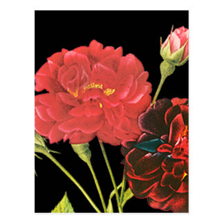 Red Roses and Bud Postcard
