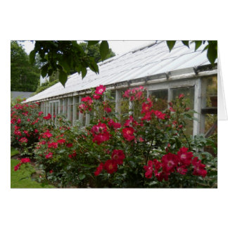 Red Roses Greenhouse Card