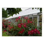 Red Roses Greenhouse Cards