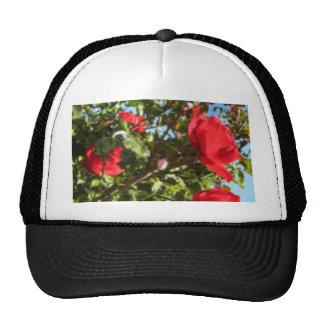 Red Roses Illustration Hat