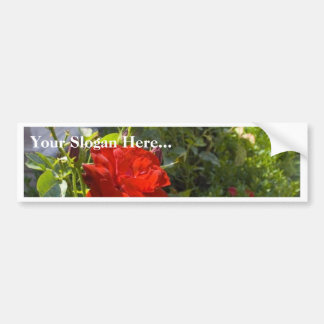 Red Roses In Castle Gardens Bumper Sticker
