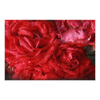 red roses in the rain photograph