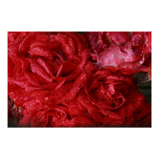 red roses in the rain poster