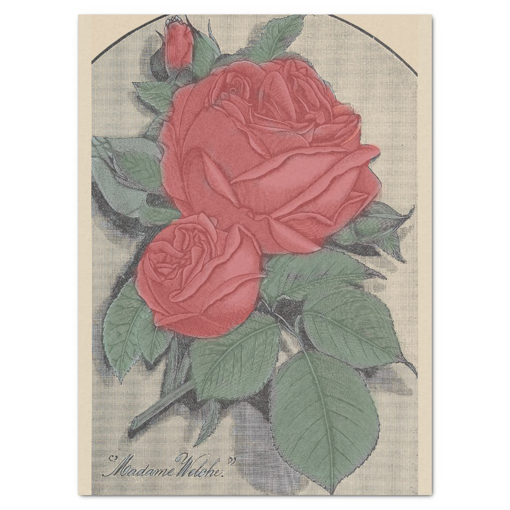 Red Roses 'Madame Welche' Tissue Paper