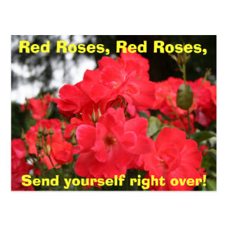 Red Roses, Red Roses, Postcard
