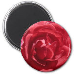 Red Roses Refrigerator Magnets