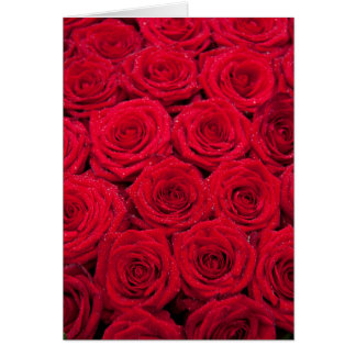 Red roses with water drops card