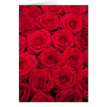 Red roses with water drops greeting card