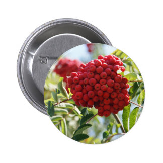 Red Rowan Berries Button