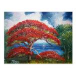 Red Royal Poinciana Tree and Sailboat Postcard