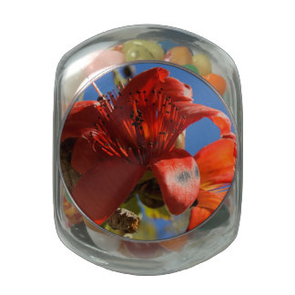 Red Rubber Tree Jelly Belly Candy Jars