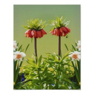 Red Rubra Tulips Print