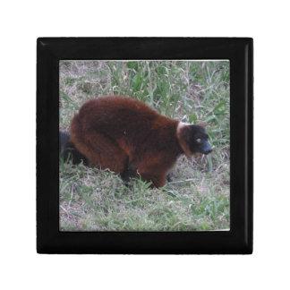 Red Ruffed Lemur 2 Keepsake Box