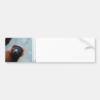 Red Ruffed Lemur  Bumper Sticker