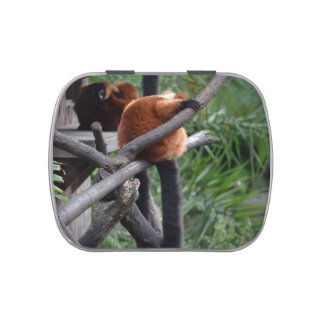 red ruffed lemur c animal on branch back hand jelly belly candy tin