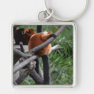red ruffed lemur c animal on branch back hand key chains