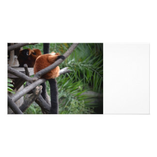 red ruffed lemur c animal on branch back hand photo card