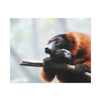 Red Ruffed Lemur Gallery Wrapped Canvas