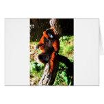Red Ruffed Lemur Cards
