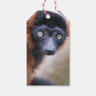 Red Ruffed Lemur Gift Tags