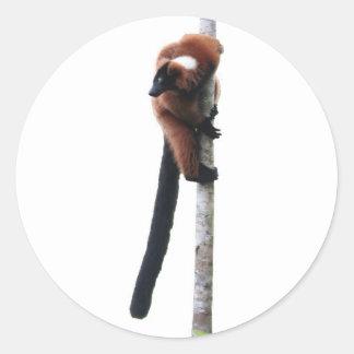 Red-ruffed lemur on a tree classic round sticker