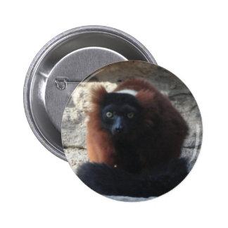 Red Ruffed Lemur Pinback Button