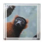 Red Ruffed Lemur Tile