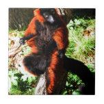 Red Ruffed Lemur Tiles