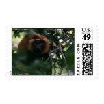 Red-ruffed lemur (Varecia rubra) Madagascar Stamp