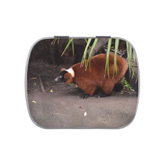 red ruffed lemur walking left w frond  animal candy tin