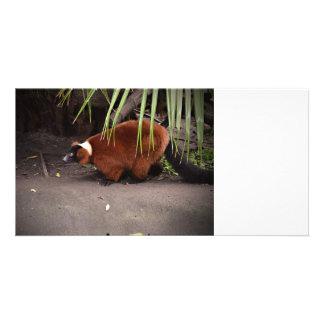 red ruffed lemur walking left w frond  animal photo card