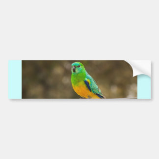 Red-rumped Parrot Bumper Sticker